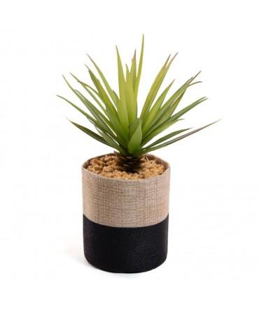 Planta Linho