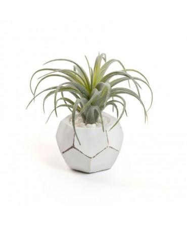 Planta Geométrica
